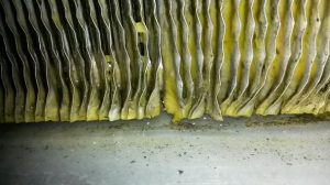 Sterile-air Mould issue